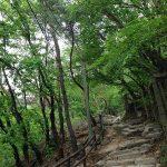 5月の北漢山登山は最高で~す!