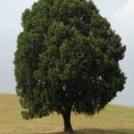 猟奇的な彼女のロケ地の木(オリンピック公園)