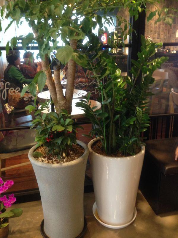 韓国 観葉植物